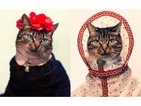 貓咪界的時尚模特兒!白血症貓咪Hummus的華麗寫真集