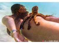 這些章魚「色色的」 直接黏在比基尼辣妹美臀