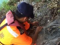 椰子蟹「卡」廢棄漁網 恆春海巡拔剪刀救援