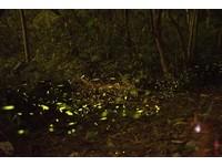 「綠螢光海」浪漫閃爍!2016北台灣絕美賞螢景點總整理