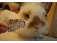 插畫家Jo創造超萌兔吉拉 談養兔人常見的3個「以為」