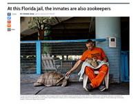 佛羅里達監獄變成動物園 受刑人搖身成「動物保育員」