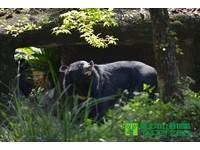 動物園「黑糖」搬新家 還會趴玻璃邊和遊客打招呼