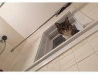 不能給點隱私嗎?貓咪老愛吵著進浴室 不開門就偷窺