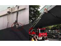 小貓受困高架橋多日 消防出動雲梯車救援被讚爆