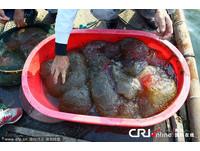 「果凍狀生物」驚現浙江魚塘 表皮佈滿小黑點