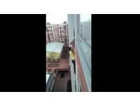 「蜘蛛哥」徒手攀壁 救援半空受困犬