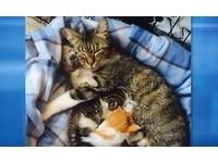 小狗出生5天媽死了 母貓霸氣一攬:我來照顧你!