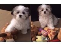 問小狗狗「誰是你最好的朋友?」 最後一關竟然「落漆」