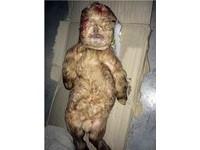 大馬驚現「人羊寶寶」 全身棕色皮毛卻有張人臉