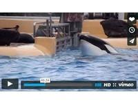 海洋公園殺人鯨撞頭自殘 受困狹窄水道求解脫