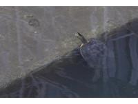 圖/大巨蛋生態園區!停工1年 內部驚見野狗鳥巢跟烏龜
