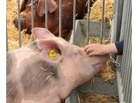 防止杜立百病毒入侵 禁止自孟加拉輸入馬豬犬貓