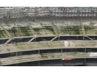 大巨蛋看台長滿青苔! 「廢墟指數」直逼羅馬競技場