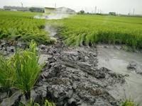 萬丹泥火山噴發 「再1個月就能收成了」農民欲哭無淚