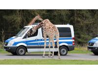 起床了!警察借宿動物園 好奇寶寶長頸鹿叫醒新朋友