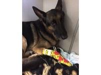 逃出大火又折返 狗狗「麥克斯」帶消防員救2歲小主人