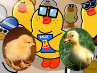 莎莉究竟是雞還是鴨?詹姆士前女友曝光!Line角色起底