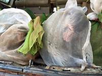 43隻猴子裝布袋塞後車廂 柬埔寨走私販見警察就逃跑