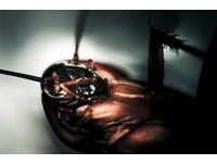 你的天敵也是「蟑螂」?克服不了恐懼...精神科治療有解