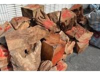 嘉義男盜採2000公斤牛樟、紅檜 警到場還正在洗贓木