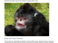 猴界貓王、夢幻壁虎 湄公河發現200種神奇新物種
