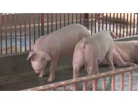 北市修自治條例禁售瘦肉精豬肉! 最快明年3月上路