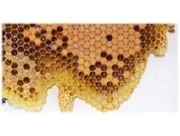 長期吃蜂王乳...恐誘發「性早熟、乳腺纖維瘤和子宮肌瘤」