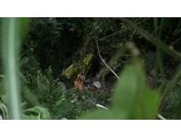 閃對向機車墜200米山谷 61歲休旅車駕駛彈飛車外亡