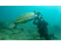 「一時好奇」摸了小琉球的綠蠵龜 潛水教練遭警送辦