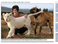 白獅寶寶跟主人一起生活 愛撒嬌個性像孩子