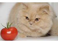 本喵才不胖! 貓咪「肚子鬆鬆」是天生的...零食快還來