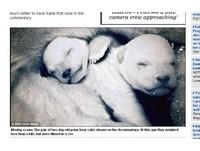 在動物園拍的! BBC北極熊紀錄片被爆造假