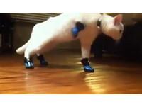 「鞋貓」不愛穿鞋子 忘記走路姿勢變得像異形