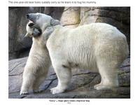 惹媽咪生氣了!北極熊寶寶熊抱媽媽
