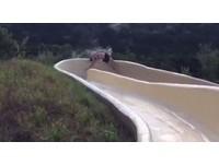 水上溜滑梯外是峭壁… 雙手抱胸往下滑竟然摔出軌道!