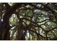 到白榕園探險!最快明年三月開放《少年PI》場景