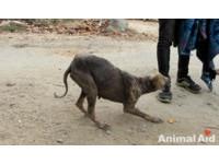 皮包骨浪犬搖尾巴求救 皮膚病讓牠全身像水泥剝落