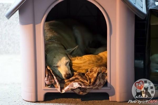 ,送给牠们一个不怕风吹雨打的狗屋,还帮牠们打预防针.但是小黄今