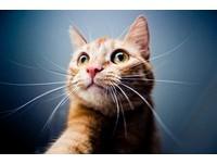 貓聽得懂人話嗎? 「和喵星人對話」3訣竅...罐罐來囉