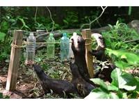 台日動物園交流升溫 台北上野簽訂動物保育友好協定