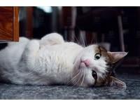 飼主愛抽菸害慘喵星人! 「二手菸」對貓咪的3大危害