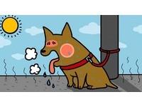 狗狗綁太陽下等主人辦事 曬10分鐘就可能熱衰竭而死
