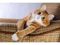 主子總是捉摸不定? 貓咪也有多重「貓格」...更惹人愛