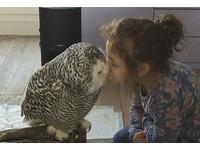 小女孩親親臉頰、貓頭鷹輕啄回應 相親相愛甜到破表