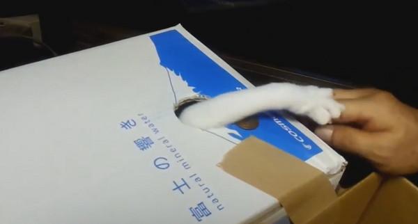 哪有這麼可愛的小偷?自製超萌真實版「偷錢貓存錢筒」結果讓網友笑翻:去你的存錢夢!