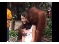 甜美正妹被猩猩「捏奶」 笑嘻嘻的任親任摸長達50秒