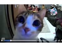 萌貓衝鏡頭前「喵喵」回應呼喚 她揪心:恨不得馬上回家