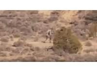雙手過膝緩走沙漠!吸血「卓柏卡布拉」來了 鳥群怪叫