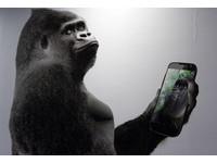 蔡慶輝/兩隻網路神獸夾殺黑猩猩